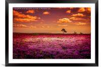 Purple Paradise, Framed Mounted Print
