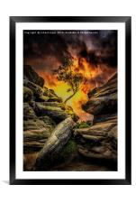 Phoenix Rising, Framed Mounted Print