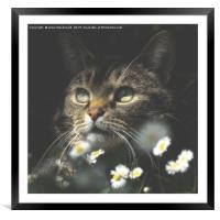 Mosey Among The Daisies, Framed Mounted Print