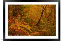 Autumn Woodland Colours, Framed Mounted Print