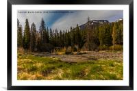 Yellowstone Landscape, Framed Mounted Print