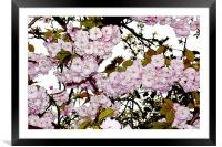 Cherry Blossom artistically portrayed, Framed Mounted Print