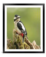Woodpecker on Dry Stone Wall, Framed Mounted Print