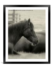 Beauty of the Beast, Framed Mounted Print