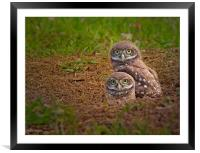 Little Balls of Fluff and Feathers, Framed Mounted Print