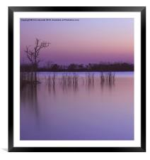 In The Still, Framed Mounted Print