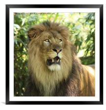 The Lion King, Framed Mounted Print