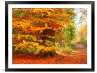 Beech Woodland in Autumn, Framed Mounted Print
