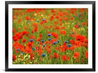 Poppies and Cornflowers, Framed Mounted Print
