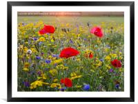 Chenies Wildflowers in July, Framed Mounted Print