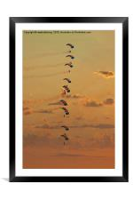 Sunset Falcons Stack Formation, Framed Mounted Print