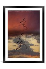 Sunset Falcons, Framed Mounted Print
