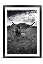 Rugged Highland Cattle, Framed Mounted Print