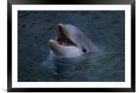 Happy Dolphin , Framed Mounted Print