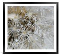 Close up seeds and water droplets, Framed Mounted Print