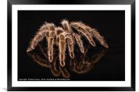 Reflections of a Spider, Framed Mounted Print
