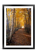 autumn path way, Framed Mounted Print