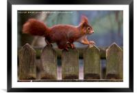 tip toe no one will see me, Framed Mounted Print