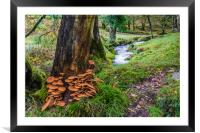 Fungi Invasion, Framed Mounted Print