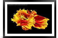 Flame, Framed Mounted Print
