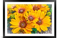 Bright and Cheerful, Framed Mounted Print