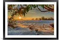 Sunrise through the Branches, Framed Mounted Print