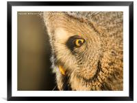 Great Grey Owl, Framed Mounted Print