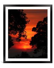 Sunset Between The trees, Framed Mounted Print