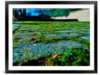 Green path, Framed Mounted Print