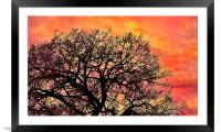 Sunset in the branches, Framed Mounted Print