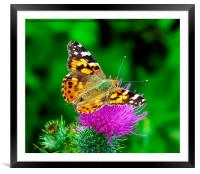 , Framed Mounted Print