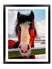 Snowy Whiskers., Framed Mounted Print
