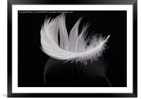 White feather, Framed Mounted Print