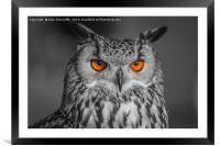 Bright Eyes, Framed Mounted Print