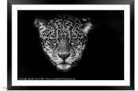 Jaguar Portrait, Framed Mounted Print