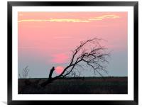 Last of the Sun, Framed Mounted Print