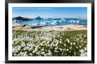 Arctic Cottongrass and Small Icebergs, Framed Mounted Print