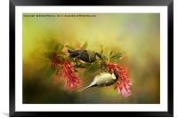 Great Tits on Flowers, Framed Mounted Print