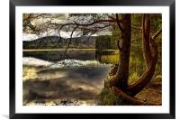 Loch Garten, Framed Mounted Print