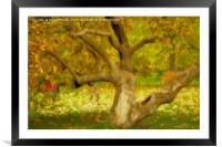 Gnarled Tree in Autumn, Framed Mounted Print