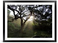 Piercing the tree cover, Framed Mounted Print