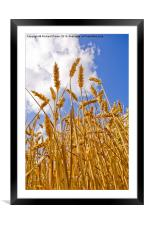 Wheat, Framed Mounted Print