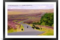 Black Sheep on Spaunton Moor, North York Moors, Framed Mounted Print