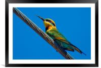 Bird on a wire (Rainbow Bee eater) Queensland Aus, Framed Mounted Print