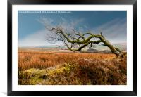 Prevailing Wind, Framed Mounted Print