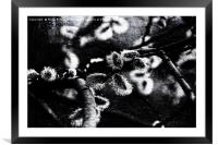 Spring Is Coming B&W Texture, Framed Mounted Print