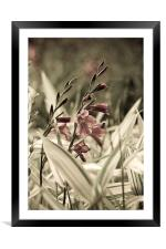 Aged Flowers, Framed Mounted Print