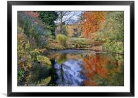 """""""Autumn reflections at Thorp Perrow lake"""", Framed Mounted Print"""
