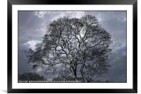 """Trees in the snow"", Framed Mounted Print"