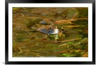"""""""Reflections of a Happy Frog"""", Framed Mounted Print"""